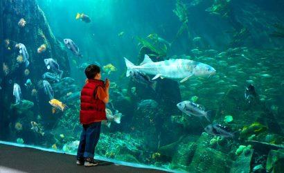 Vancouver Aquarium - Vancouver Tour - Vancouver Tours - Vancouver City Tours